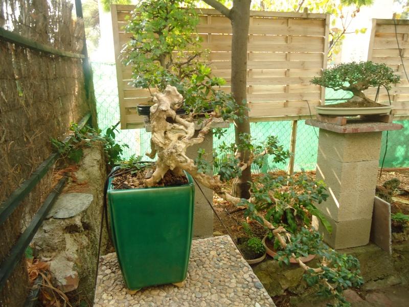 Visite du jardin Jean Pierre Cardinal Dsc09628