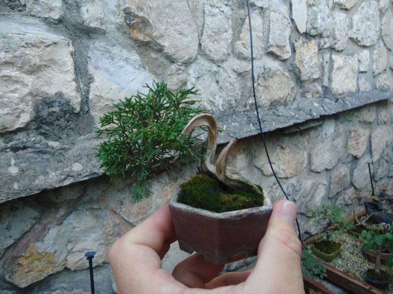 Visite du jardin Jean Pierre Cardinal Dsc09712
