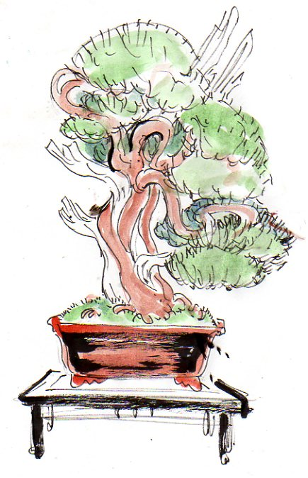 Gros Gros Juniperus Projet14