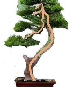 Gros Gros Juniperus Projet15