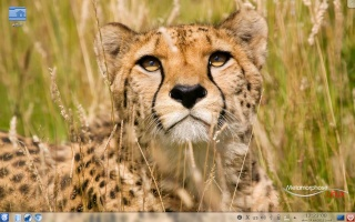 Lançamento do Metamorphose Linux 4.1 (Cheetah) Imagem10