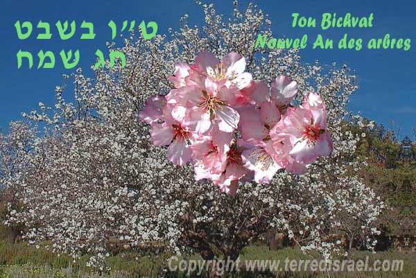 Tou Bichvat (Nouvel an des arbres) Fate_d10