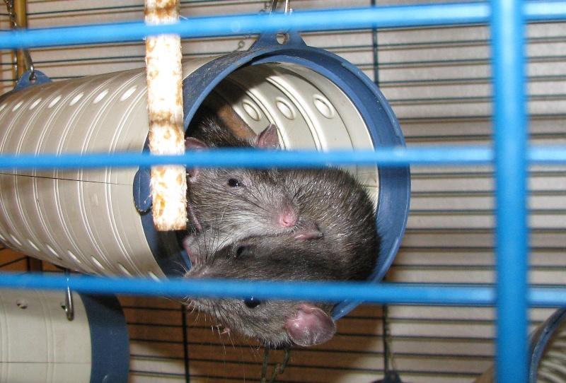 Comment dorment vos rats? - Page 5 Img_2623