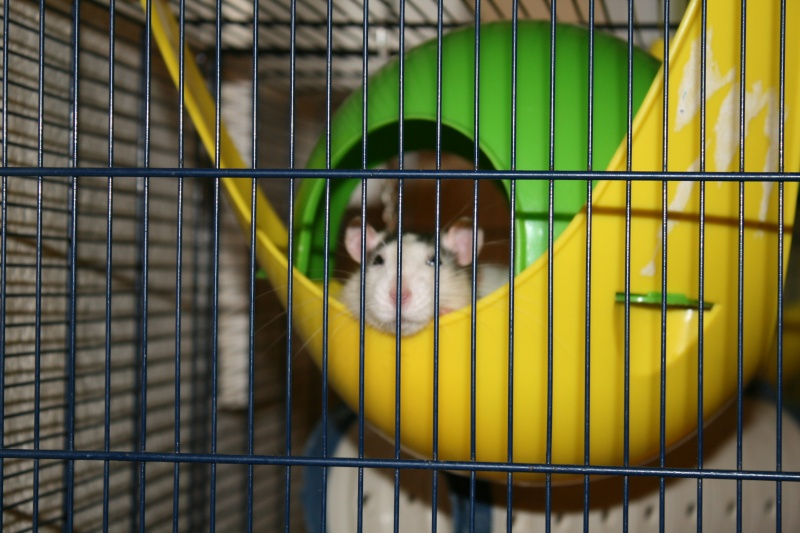 Comment dorment vos rats? - Page 5 Img_2912