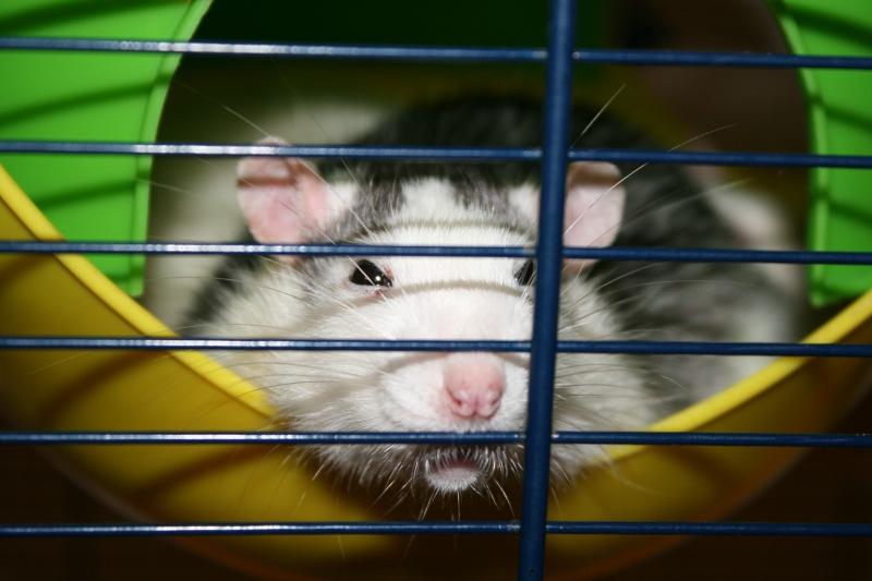 Comment dorment vos rats? - Page 5 Img_3011