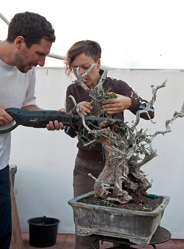 Marija and Andrija have prepared some trees for exhibit in Dusseldorf, Germany Rdsc_222