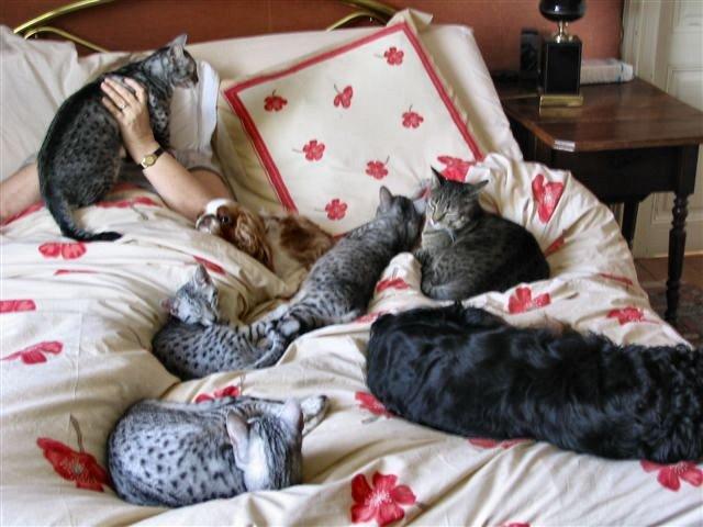 Allergies : ne laissez pas votre chat rentrer dans la chambre ! Meute-12