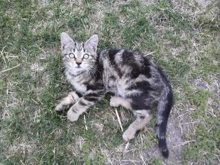 Beaux chatons à donner 06280110