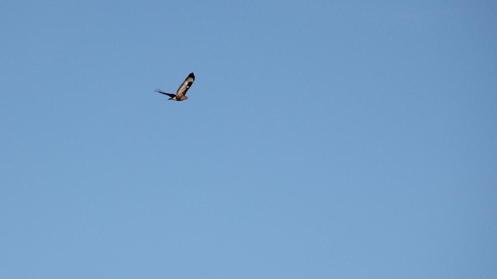 l'oiseau une misère a shooter... +2 (sortie 03/03) Img_9410