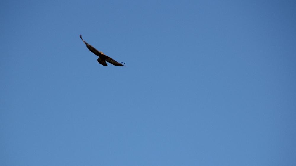 l'oiseau une misère a shooter... +2 (sortie 03/03) Img_9411