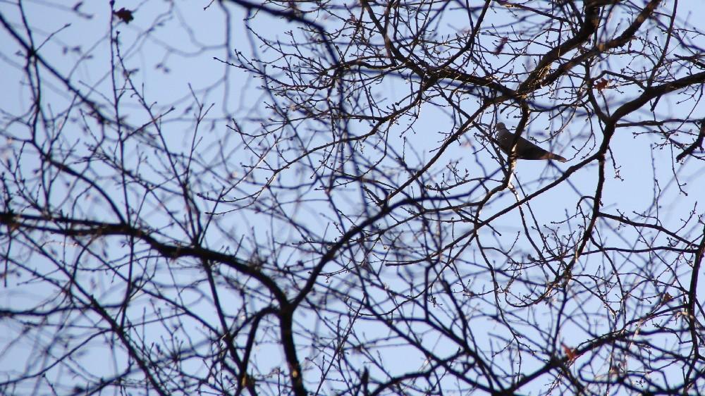 l'oiseau une misère a shooter... +2 (sortie 03/03) Img_9510