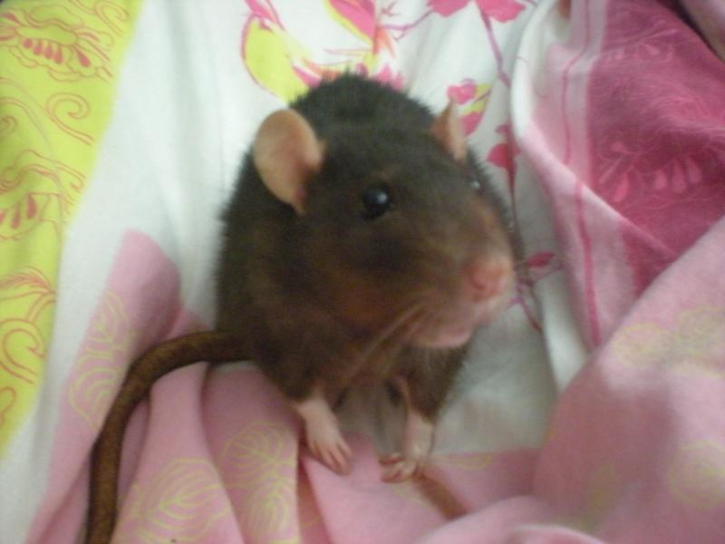 Nouvelles de Jo (ratte) Photos22