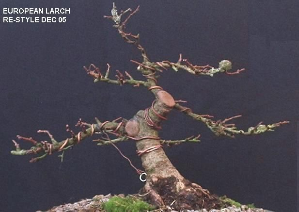 Shohin Larch 2005 to date Lp310