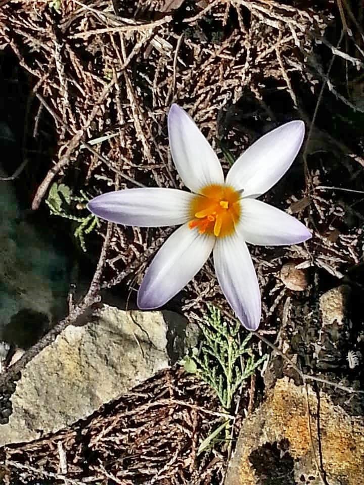 Göynem Manzaraları-18 Şubat 2019 Ibre1010