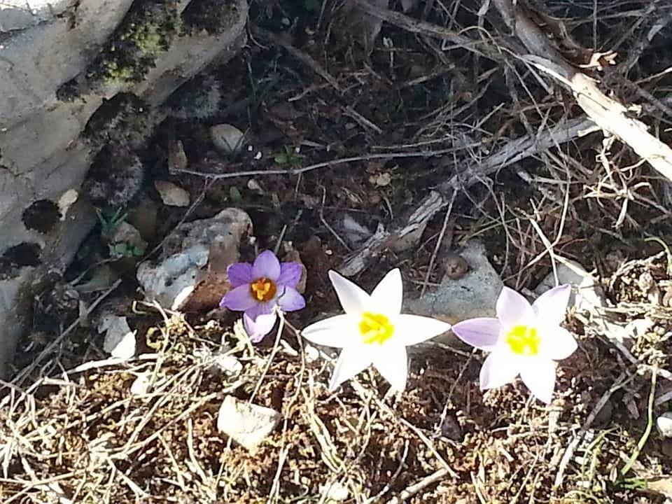 Göynem Manzaraları-18 Şubat 2019 Ibre1310