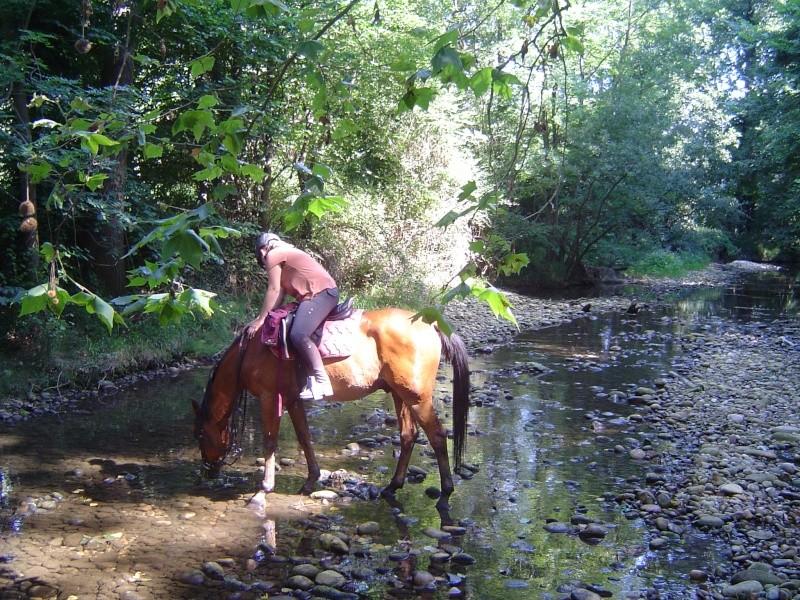 cherche cavaliers proches Chanas, St Rambert Dsc05917
