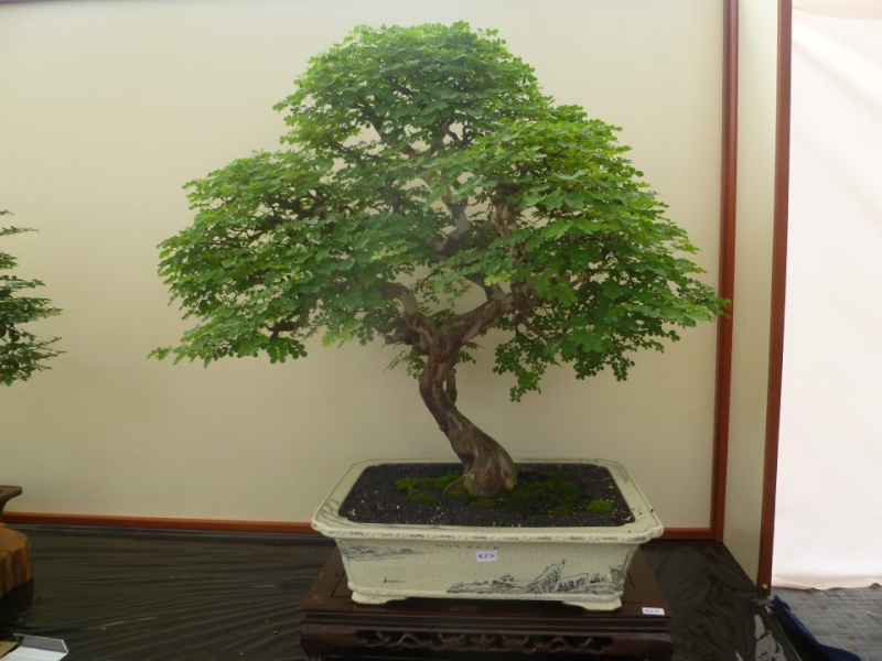 Brazilian raintree (before and after) 31703410