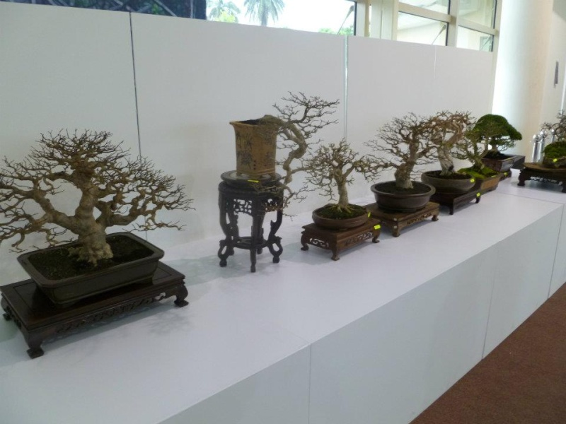 The Unique of Bonsai Show 2012(15 Mar - 15Apr, Putrajaya) - Malaysia Bs110