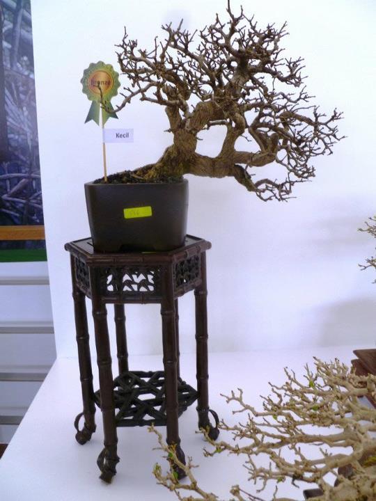 The Unique of Bonsai Show 2012(15 Mar - 15Apr, Putrajaya) - Malaysia Bs2010
