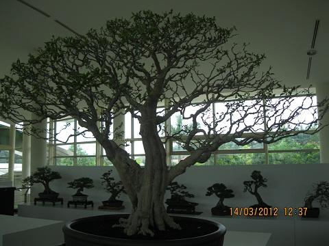 The Unique of Bonsai Show 2012(15 Mar - 15Apr, Putrajaya) - Malaysia Img_1016