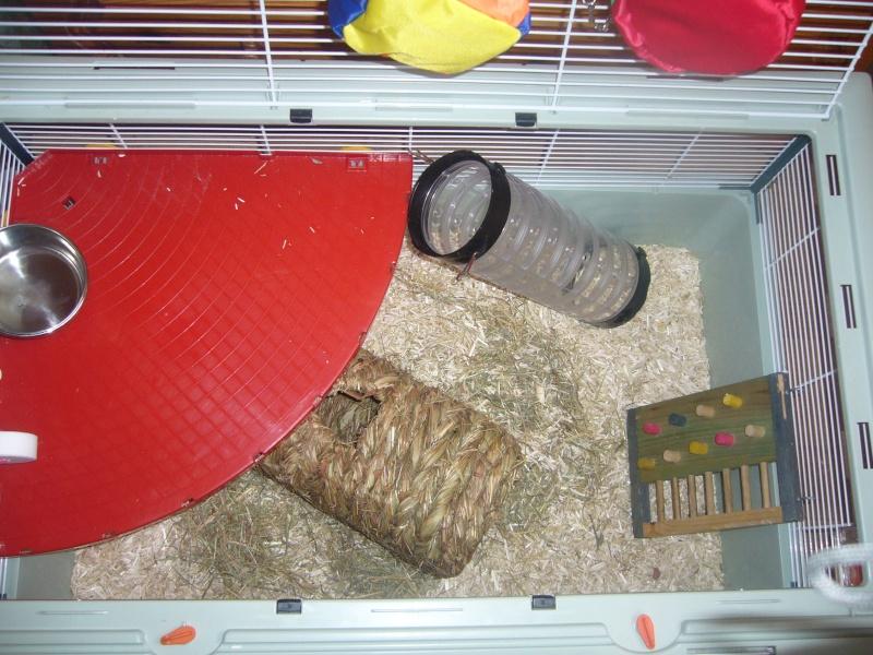 Vend cage criceti 15 (59) P1070910
