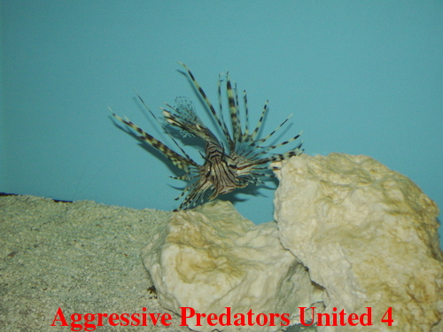 Aggressive Predators United Official Voting Thread For August 2011 POTM Apu_411