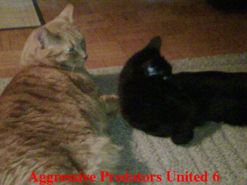 Aggressive Predators United Official Voting Thread For August 2011 POTM Apu_611