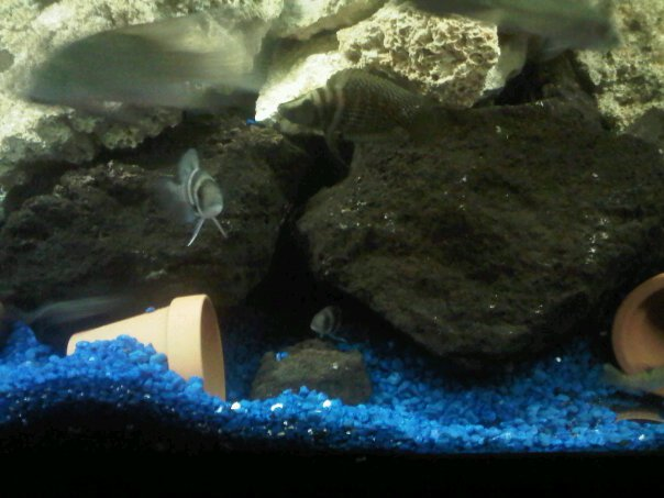 A Bunch Of Full Tank Shots From My Livingroom Michae75