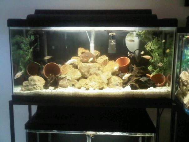 A Bunch Of Full Tank Shots From My Livingroom Michae77