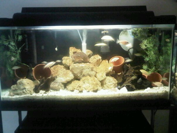A Bunch Of Full Tank Shots From My Livingroom Michae78