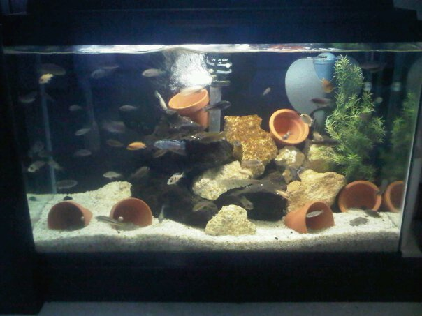 A Bunch Of Full Tank Shots From My Livingroom Michae82