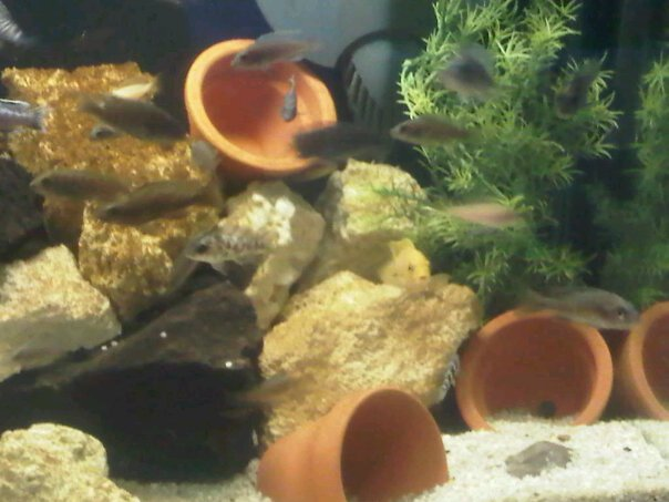 A Bunch Of Full Tank Shots From My Livingroom Michae85