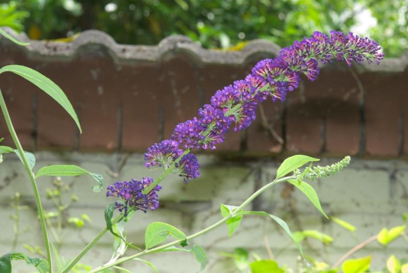 Begleitpflanzen der Kakteen in Haus und Garten - Seite 6 Bild1843