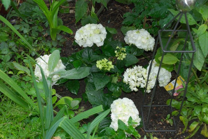 Begleitpflanzen der Kakteen in Haus und Garten - Seite 6 Ilder_10