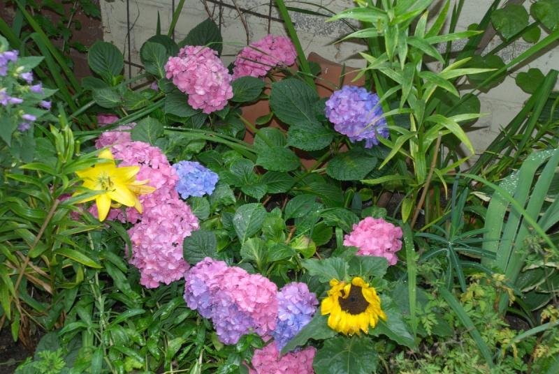 Begleitpflanzen der Kakteen in Haus und Garten - Seite 6 Ilder_11