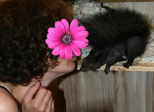 ♥♥♥ Photos et vidéos de Vanille et Chocolat,écureuils Japonais à ventre blanc... et de leurs frères et soeurs poilus ! ♥♥♥ - Page 5 2011_042