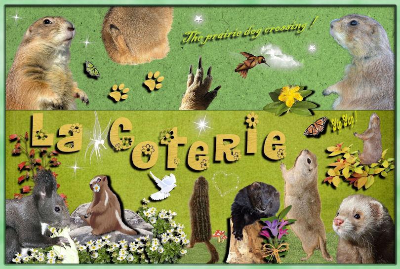 Chiens de prairie,spermophiles,écureuils Japonais,...Une passion !
