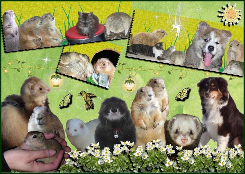 Chien de prairie,spermophile,écureuil de richardson,écureuil du Japon Bannia12