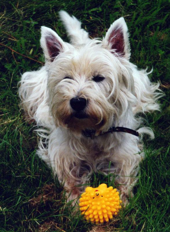 ♥♥♥ Mes adorables toutous... photos de complicité avec mes chiens de prairie... ♥♥♥ - Page 2 Bloumy10