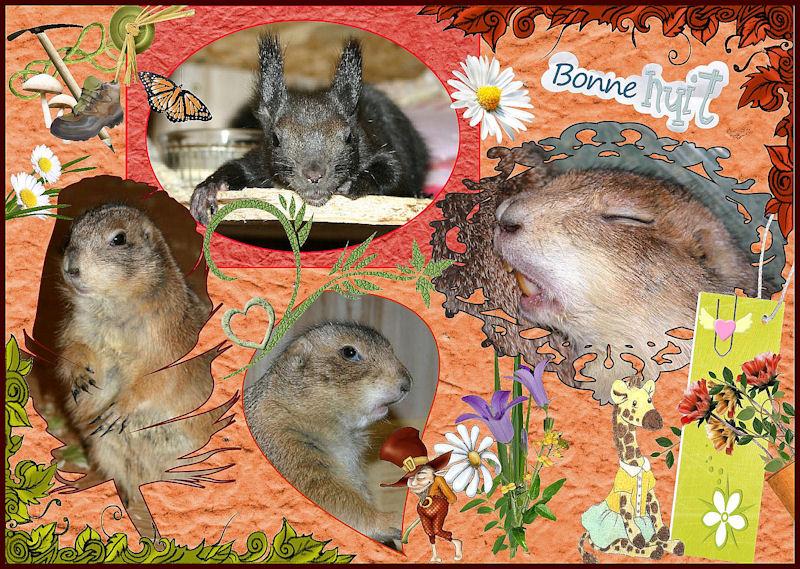 ♥♥♥ Mes petits n'amours de chiens de prairie, avec leurs demi-frères... ♥♥♥ - Page 6 Copie_11