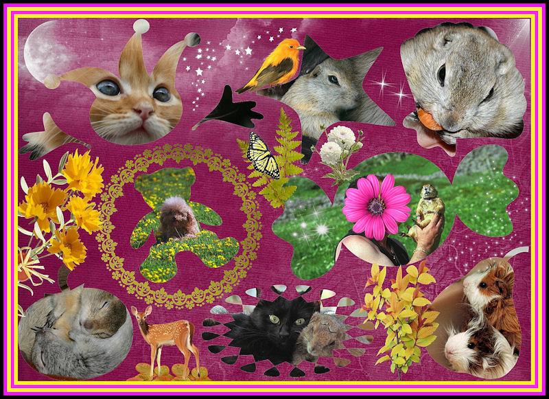 ♥♥♥ Mes petits n'amours de chiens de prairie, avec leurs demi-frères... ♥♥♥ - Page 6 Copie_13