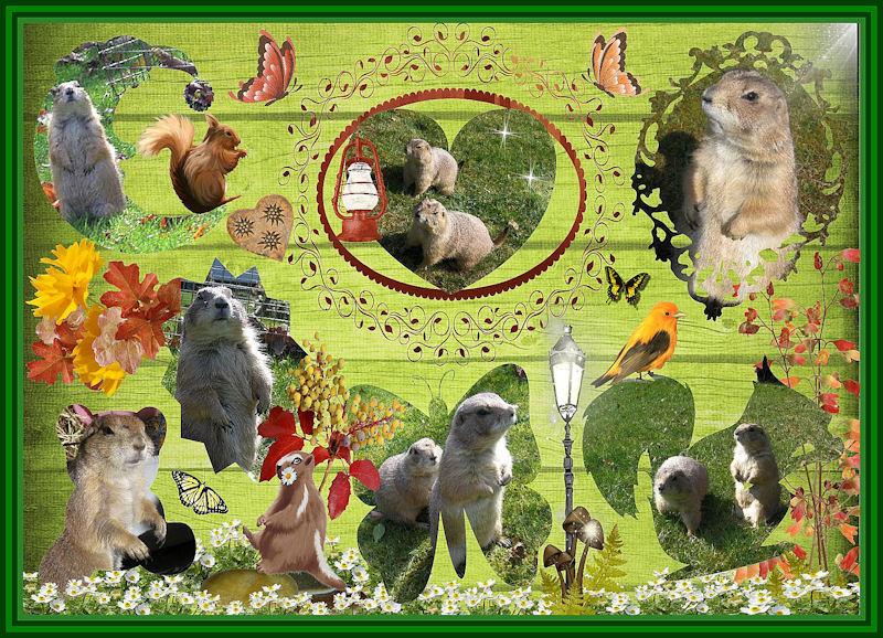 ♥♥♥ Mes petits n'amours de chiens de prairie, avec leurs demi-frères... ♥♥♥ - Page 6 Copie_14