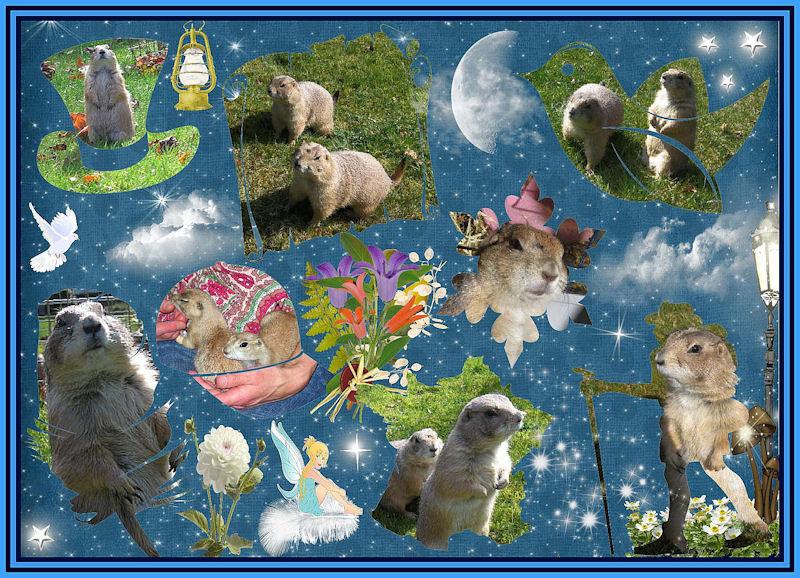 ♥♥♥ Mes petits n'amours de chiens de prairie, avec leurs demi-frères... ♥♥♥ - Page 6 Copie_15