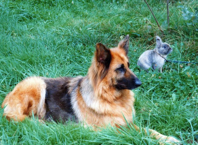 ♥♥♥ Mes adorables toutous... photos de complicité avec mes chiens de prairie... ♥♥♥ - Page 2 Geava_10