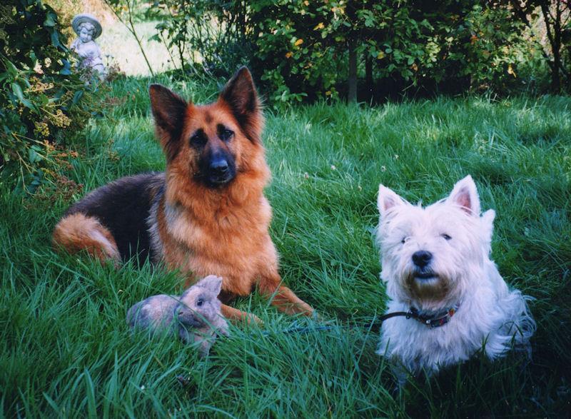 ♥♥♥ Mes adorables toutous... photos de complicité avec mes chiens de prairie... ♥♥♥ - Page 2 Geava_11