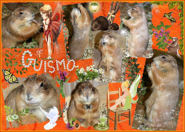 ♥♥♥ Mes petits n'amours de chiens de prairie, avec leurs demi-frères... ♥♥♥ - Page 6 Guismo10