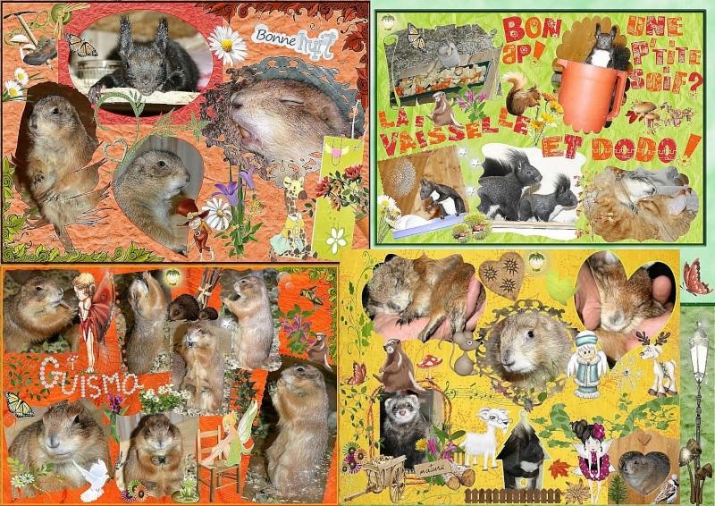 ♥♥♥ Mes petits n'amours de chiens de prairie, avec leurs demi-frères... ♥♥♥ - Page 6 Papier11