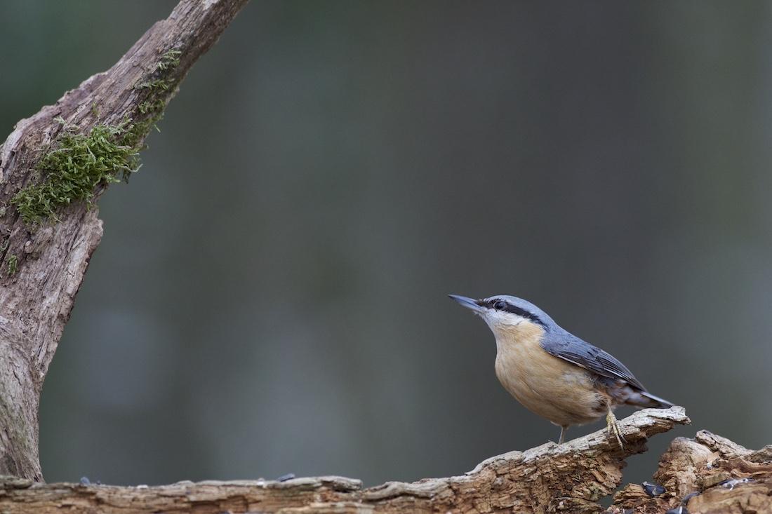 Oiseaux de nos forêts : 2019-016