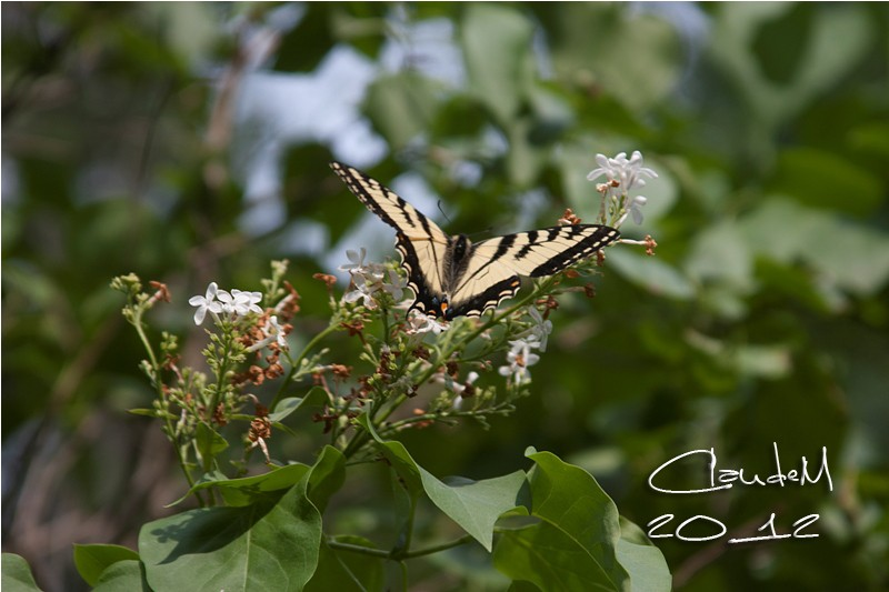 papillons Img_2810