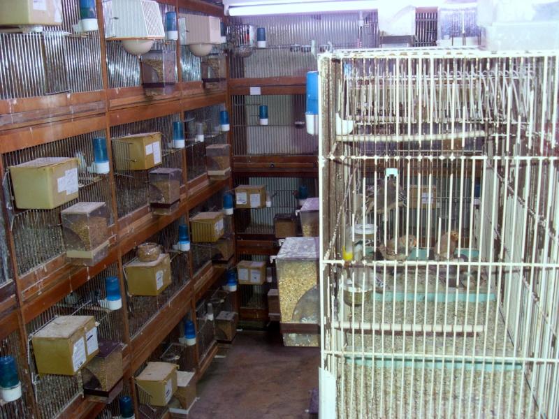 Présentation de ma pièce d'élevage Sl382812
